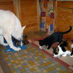 Hund und Katze fressen gemeinsam