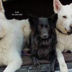 Hunde aus dem Kofferraum - Hunderziehung