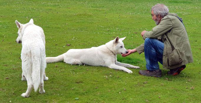Angst vor Hunden überwinden
