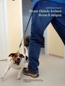 Hund Kalle mag keinen Besuch