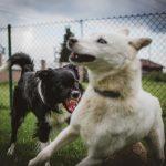 Problemhunde-Therapie, Problemhunde