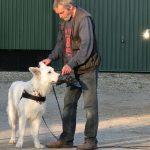 Suchhund - Pettrailer 2