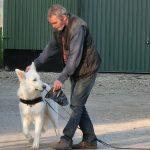 Suchhund - Pettrailer 3